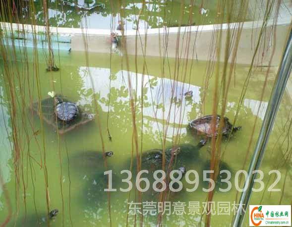 产品名称:长安龟池设计施工,长安鱼池设计施工,长安凉亭花架工程